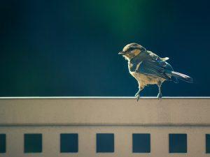 Take part in the RSPB's Big Garden Birdwatch