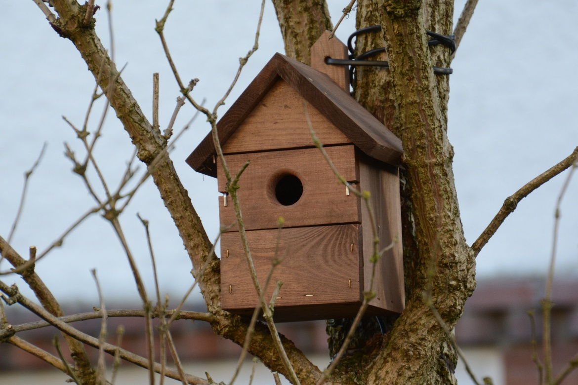 Enjoy the wildlife from your Malvern Garden Building with a nesting box!