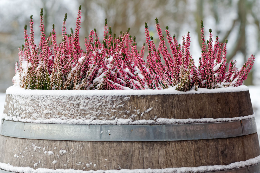 Plants for autumn and winter