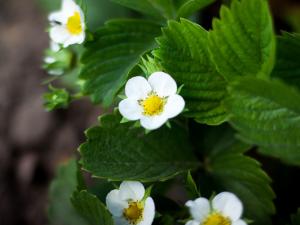 June garden tips