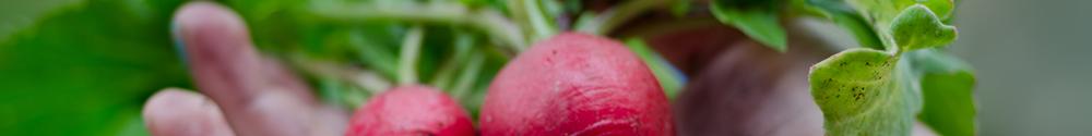 September gardening tips from Malvern Garden Buildings
