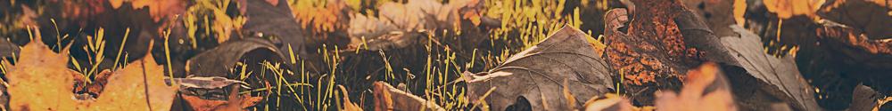November gardening tips from Malvern Garden Buildings