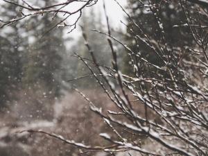 January garden tips 2018