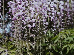 August garden tips 2018