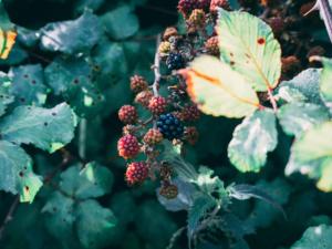 September garden tips 2018