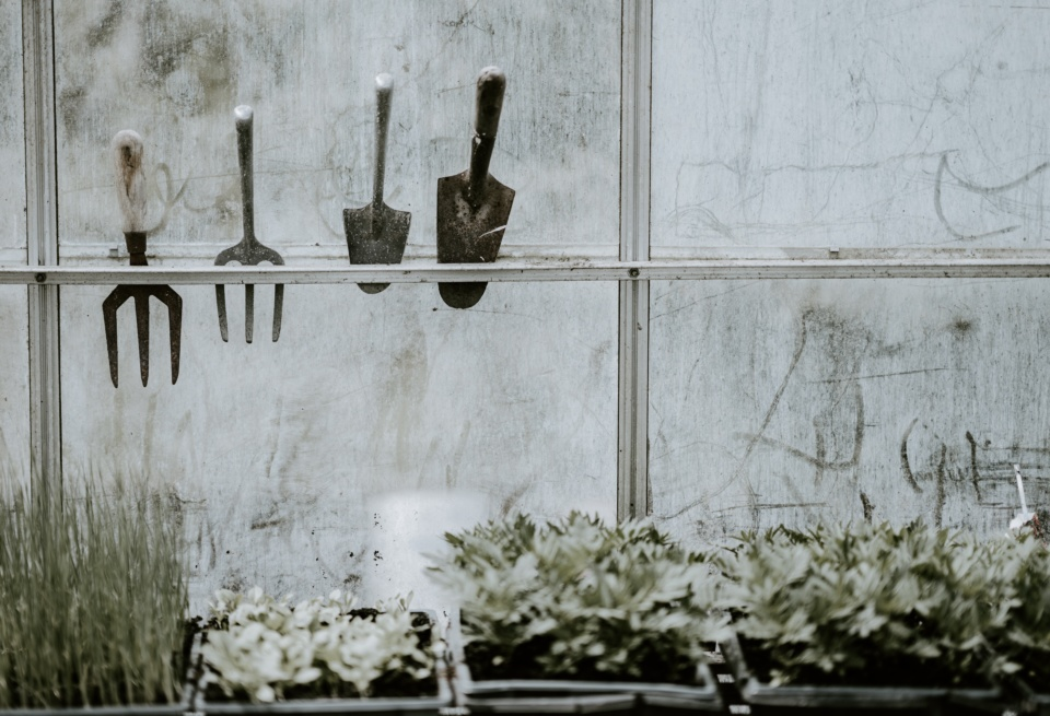 Inside a greenhouse looking out. Plants are displayed on shelves and tools