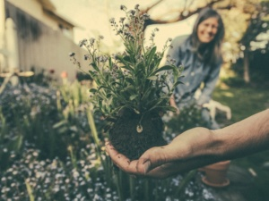 Notes from the garden: Gardening as Therapy