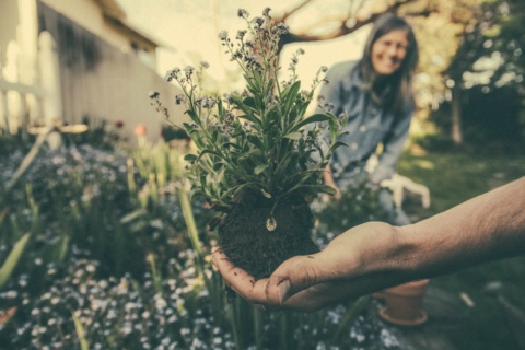 Gardening as therapy