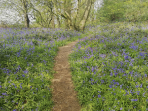 Best Bluebell Walks