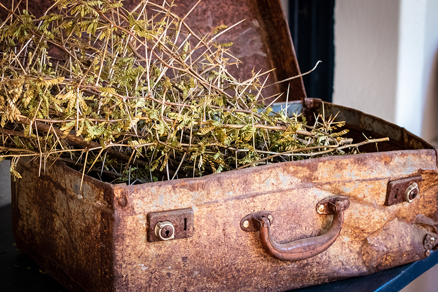 Old suitcase used as planter