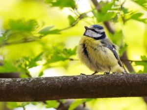 Gardening Tips to Attract Wildlife to Your Garden