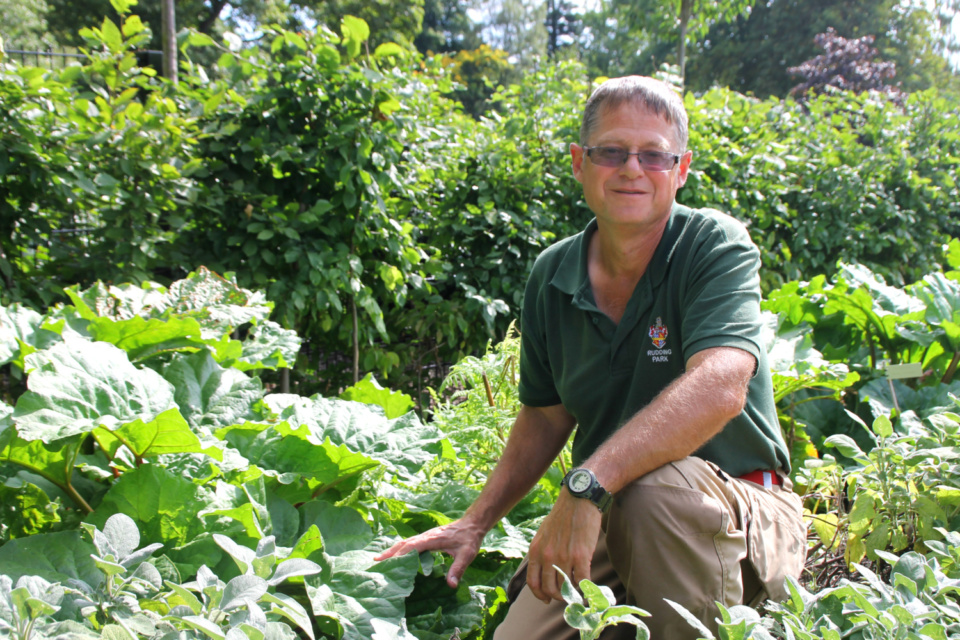 Male gardener crouching down in vegetable patch
