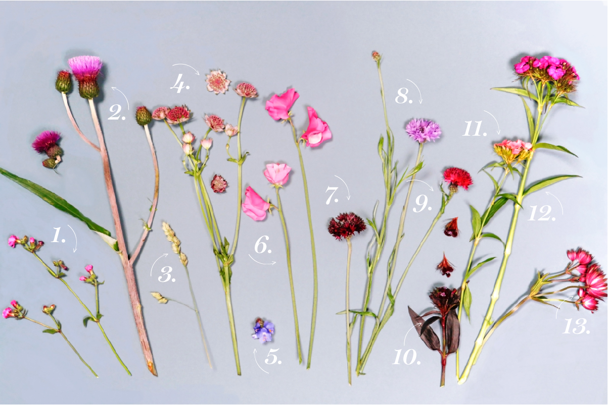 Flat lay of British blooms on a light blue background, illustrated with numbers to help with identification