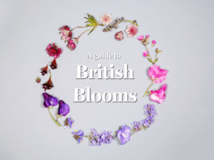 Botanical Wisdom: British Blooms Mini Guide