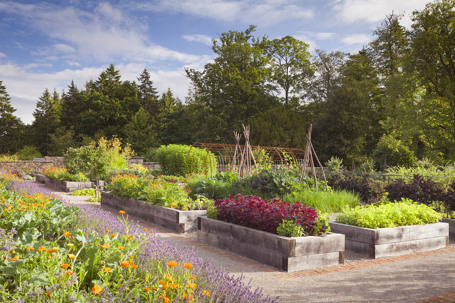 General view of kitchen garden at Rudding Park