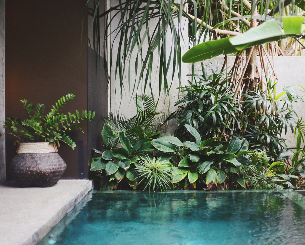 Pool and botenical plants spa garden