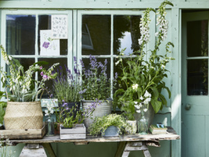 Your Essential Guide – Tips to Spruce up Your Garden