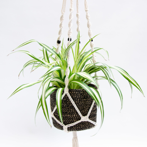 Variegated houseplant in macrame hanger