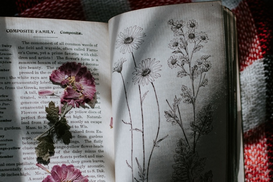 Cottagecore decor - pressed flowers in a book