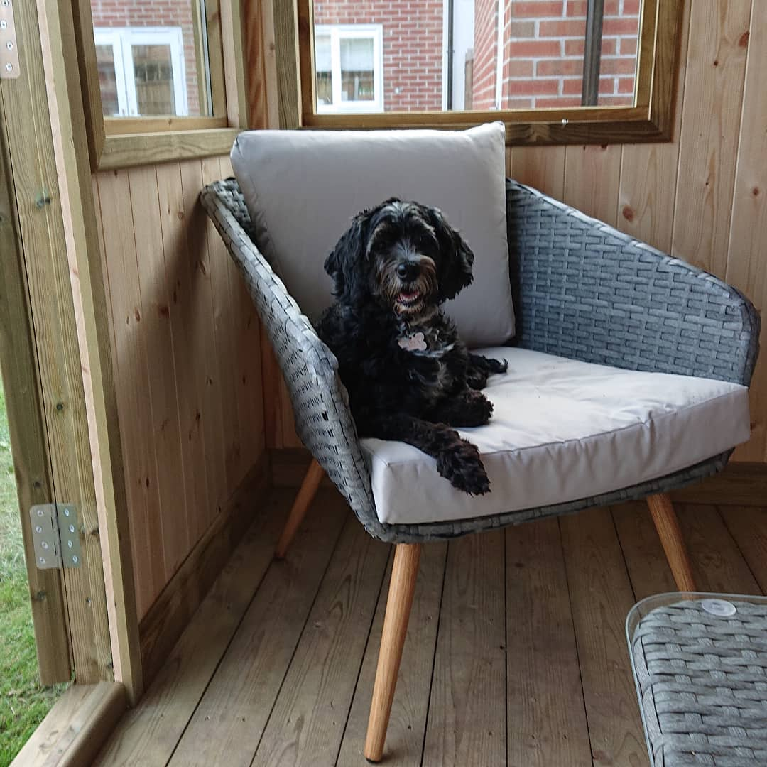 A black dog sits on a comfortable garden chair in a wooden garden room.