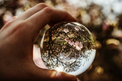 Hand holding crystal ball with tree in blossom reflected in it.