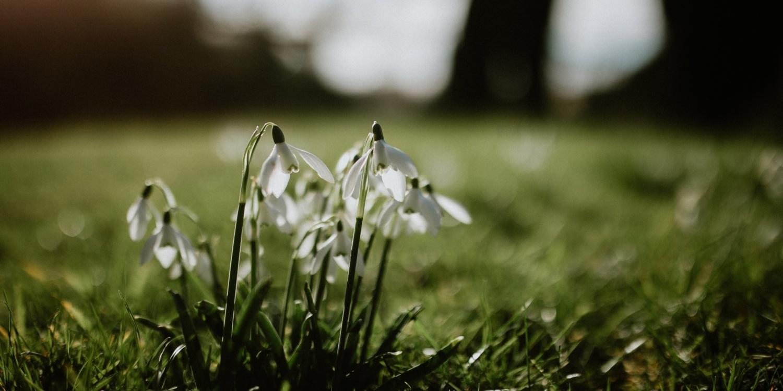 Winter Walks: Snowdrop Walks Near You by Garden Escape